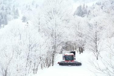 TENGU CAT-SKI GUIDES|シルキーパウダーのオープンバーンや静寂な森でのツリーランを心ゆくまで楽しめる|北海道