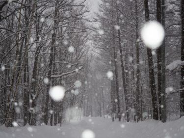 この冬は滑り手に好条件?「ラニーニャ現象・Go Toトラベル・山は低密・インバウンド減少」'20-21シーズンがいよいよ始まる!