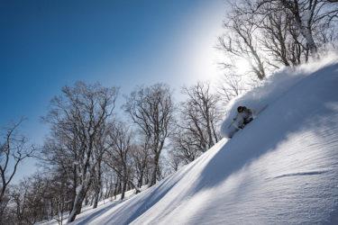 ツリーランが熱い! ツリーランエリアが充実したスキー場はどこだ